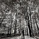 aspectphotography (10)